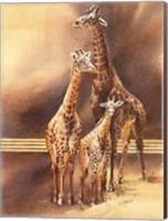 Family of Giraffes Fine-Art Print