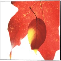 Inflorescent Leaves IV Fine-Art Print