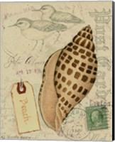 Postcard Shells I Fine-Art Print