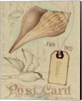 Postcard Shells IV Fine-Art Print