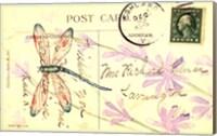 Postcard Dragonfly III Fine-Art Print