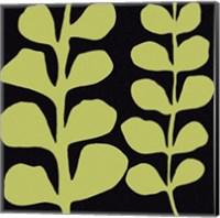 Green Fern on Black Fine-Art Print