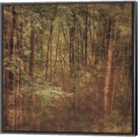 Fog in Mountain Trees Fine-Art Print