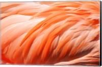 Flamingo Feathers Closeup Fine-Art Print