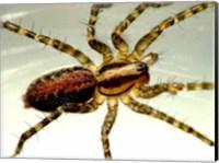Spider Close Up Fine-Art Print