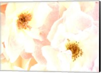 Rose Blush Fine-Art Print