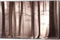 The Cloaking Woods Fine-Art Print