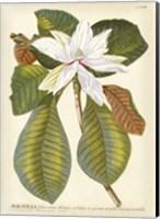 Magnificent Magnolias II Fine-Art Print