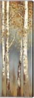 Butterscotch Birch Trees I Fine-Art Print