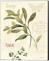 Aromatique IV Fine-Art Print
