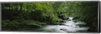 River flowing in the forest, Aberfeldy, Perthshire, Scotland Fine-Art Print