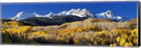 USA, Colorado, Rocky Mountains, aspens, autumn Fine-Art Print
