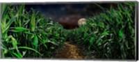 Dark corn field Fine-Art Print