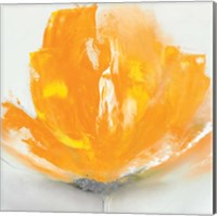 Wild Orange Sherbet II Fine-Art Print