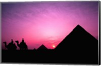 Colorful Sunset Silhouetting Men and Camels at the Great Pyramids of Giza, Egypt Fine-Art Print