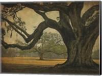 Two Oaks in Rain, Audubon Gardens Fine-Art Print
