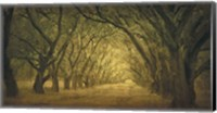 Evergreen, New Alley, Right Side Fine-Art Print
