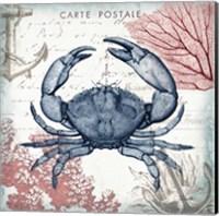 Coastal Sea Life II Fine-Art Print