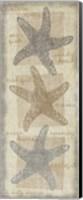Star Fish Fine-Art Print