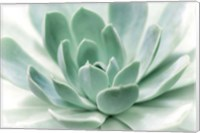 Zen Fine-Art Print
