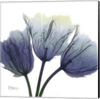 Midnight Tulips Trio Fine-Art Print