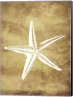 Gold Starfish Fine-Art Print