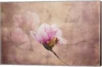 Pink Magnolia 2 Fine-Art Print