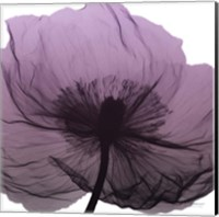 Poppy Purple Fine-Art Print