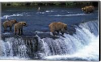 Group of Brown Bears in Lake Fine-Art Print