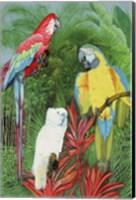 3 Parrots Fine-Art Print