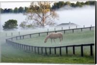 Horses in the Mist #3, Kentucky 08 Fine-Art Print
