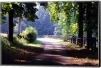Path Into the Woods, Burgandy, France 99 Fine-Art Print