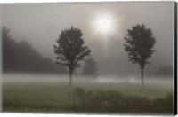 Two Trees & Sunburst, Logan, Ohio 10 Fine-Art Print