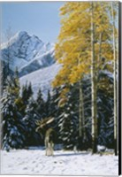 Trembling Aspen Fine-Art Print