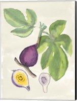 Watercolor Fruit I Fine-Art Print