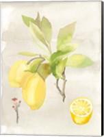 Watercolor Fruit II Fine-Art Print