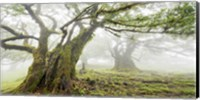 Laurel Forest in Fog, Madeira, Portugal Fine-Art Print