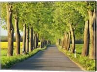 Lime Tree Alley, Mecklenburg Lake District, Germany 1 Fine-Art Print