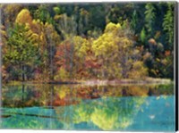 Forest in autumn colours, Sichuan, China Fine-Art Print