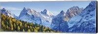Larch Forest And Cima Bel Pra, Italy Fine-Art Print