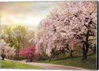 Asian Cherry Grove Fine-Art Print