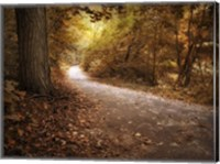 Enlightened Path Fine-Art Print
