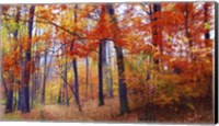 Autumn Woodland Fine-Art Print