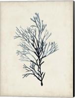 Seaweed Specimens IV Fine-Art Print