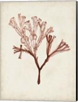 Seaweed Specimens V Fine-Art Print