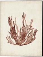 Seaweed Specimens VII Fine-Art Print