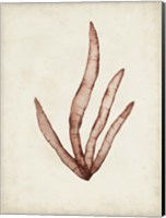 Seaweed Specimens VIII Fine-Art Print