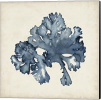 Seaweed Specimens IX Fine-Art Print