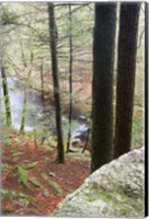 Forest of Eastern Hemlock Trees in East Haddam, Connecticut Fine-Art Print