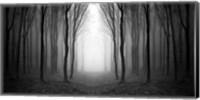 Dark Woods Fine-Art Print